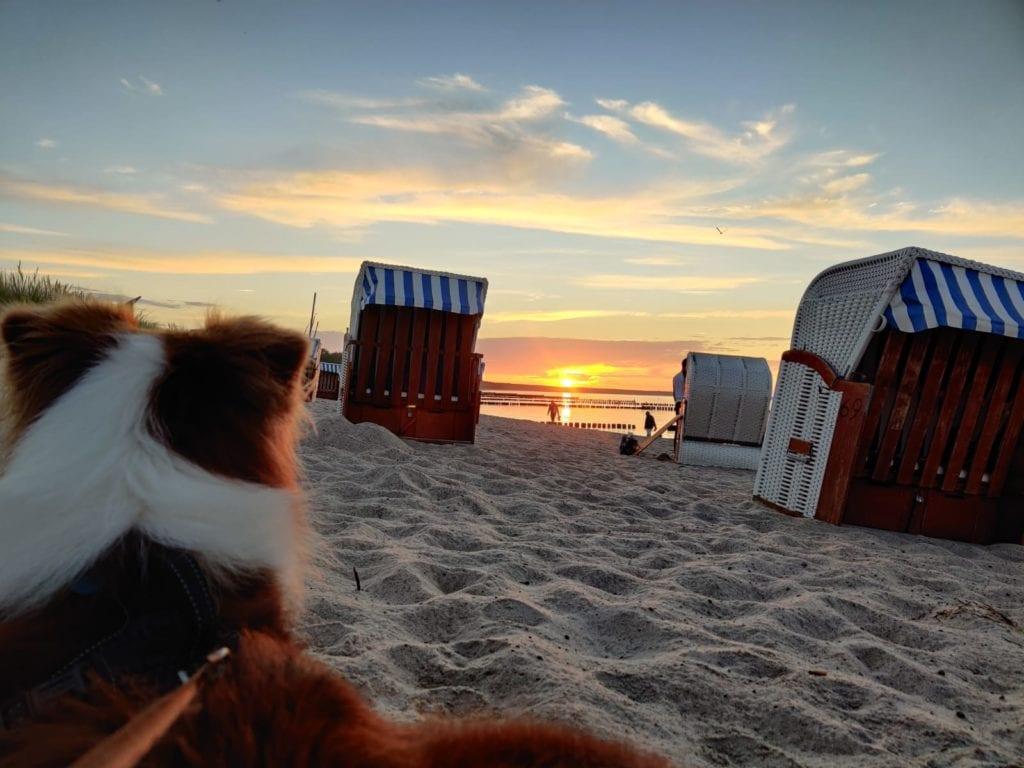 vakantie kimberly alkemade met de honden
